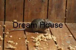 كم عدد مواليد الفئران