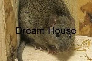 افضل طريقة لقتل الفئران