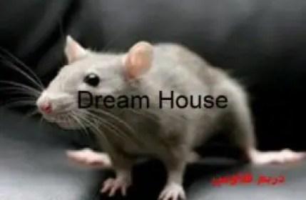 دعاء لطرد الفئران