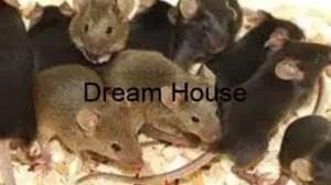 طرق مكافحة الفئران المنزلية
