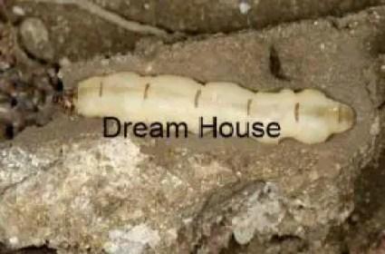 بيت النمل الابيض