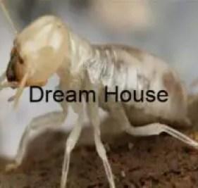 افضل شركة مكافحة النمل الابيض بالرياض 0531071106 مكافحة الارضة إبادة تامة ضمان 3 سنوات