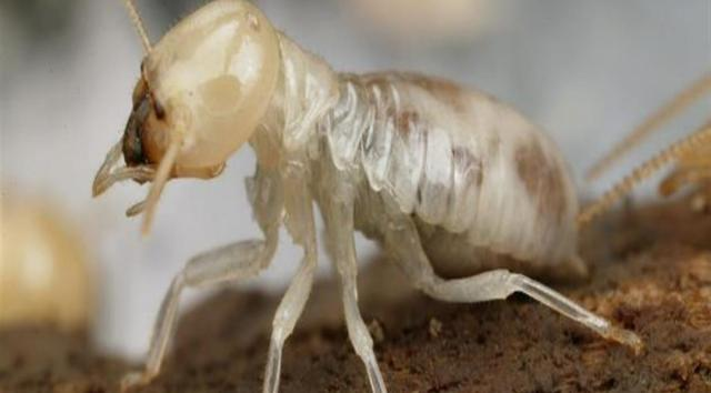 افضل شركة مكافحة النمل الابيض بالرياض