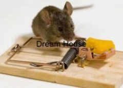اماكن بيع مصيدة الفئران الرياض