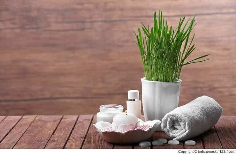 Auswahl geeigneter Pflanzen für den Saunabereich