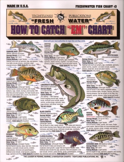 How To Catch Different Types Of Fish