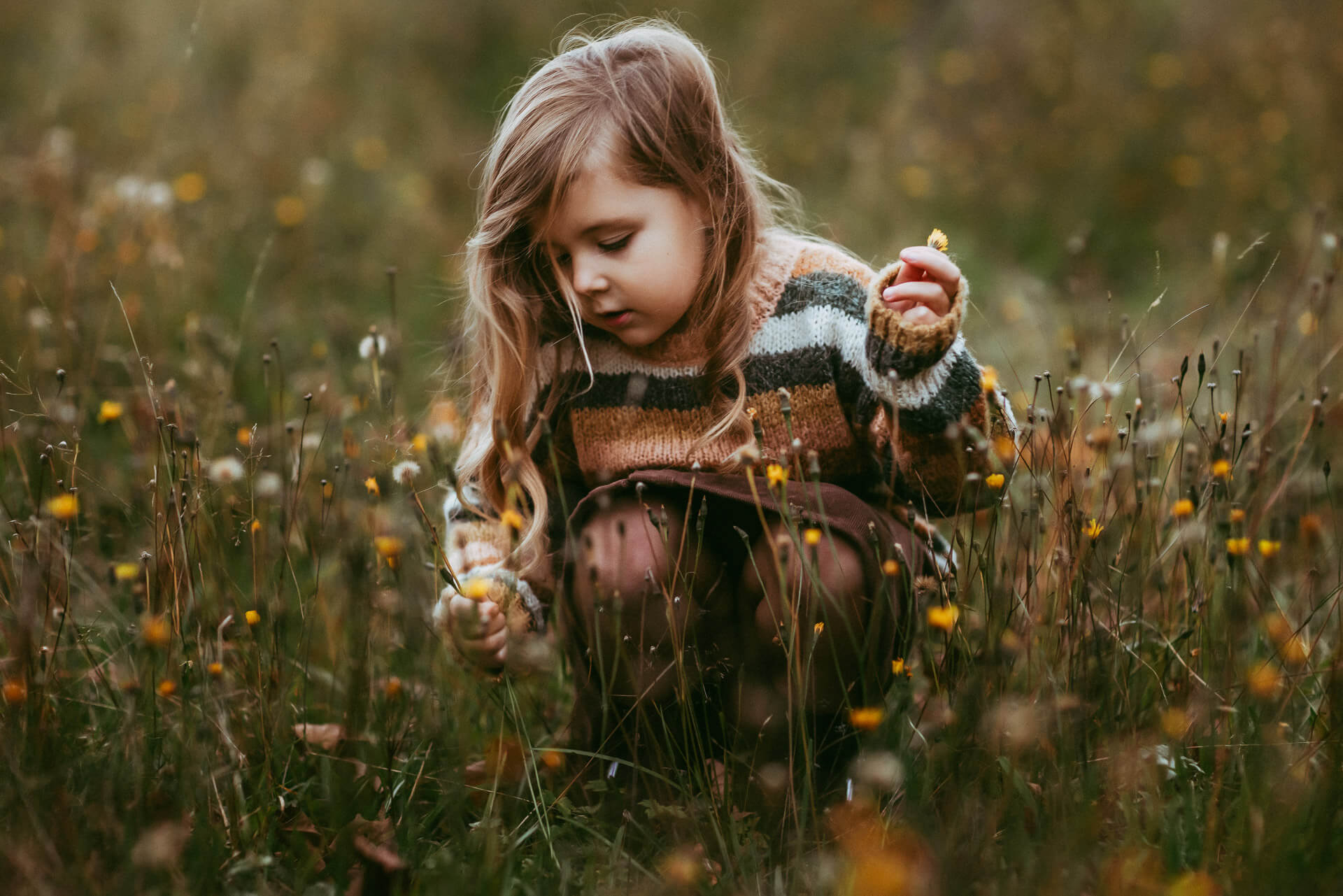 Little girl picking a flower in a Vermont field.