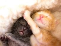 Precious Kitten Life