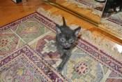Sammy...Rat Pack Leader!