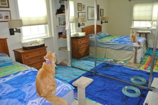 Oh Cat! I look pawful!! Is that really me??