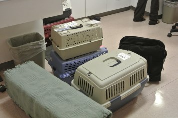 Kitty line up for surgeries