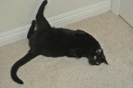 Now I do a half body spine stretch