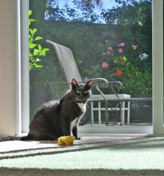 This Sunpuddle is mine!