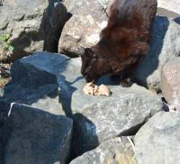Others want to eat on the rocks