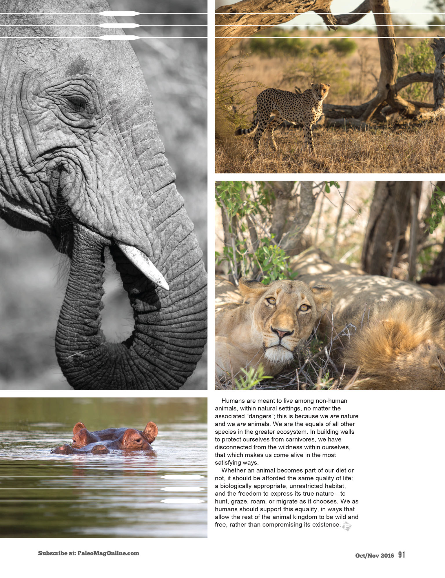 What does it mean to be wild? Article for Paleo Magazine on Kruger National Park - Sleeping Lions