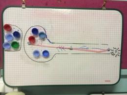 première représentation d'une synapse (travail de groupe)