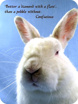 Real Bunnies For Sale Near Me : bunnies, Adopt, Rabbit, SaveABunny