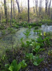 Cowles Bog by Nicole Barker