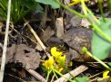 A turtle enjoying Trail Creek Fen.