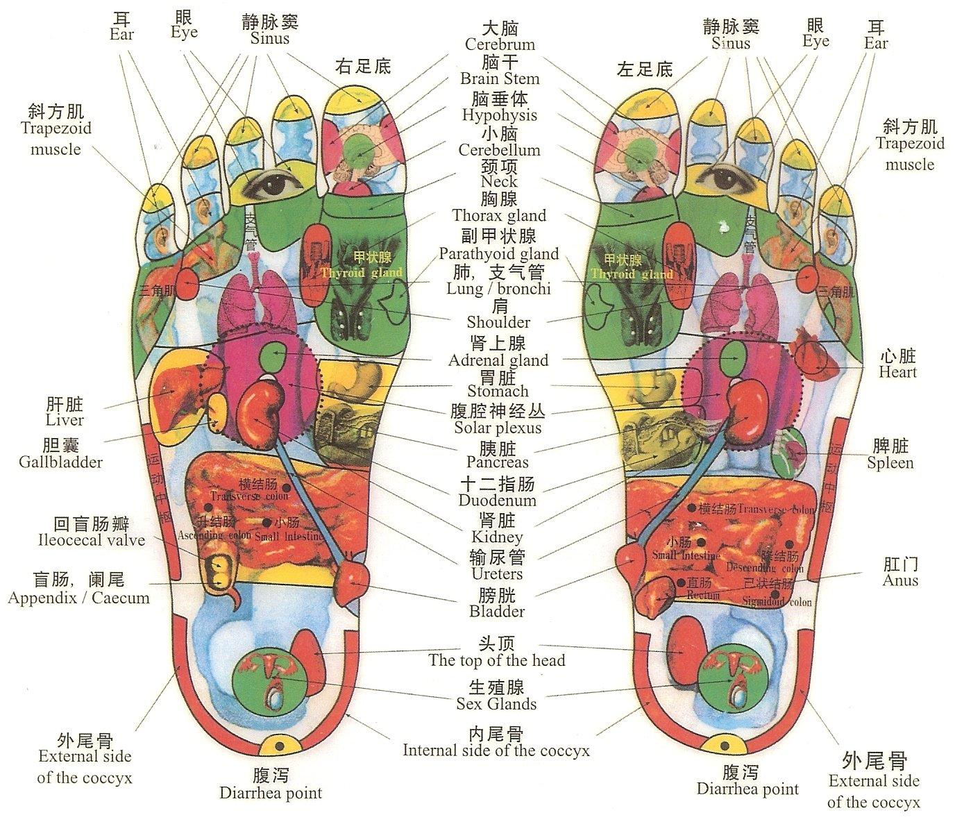 reflexology foot diagram reflex zones whelen 295hfsa1 wiring similarities between and wudhu ablution