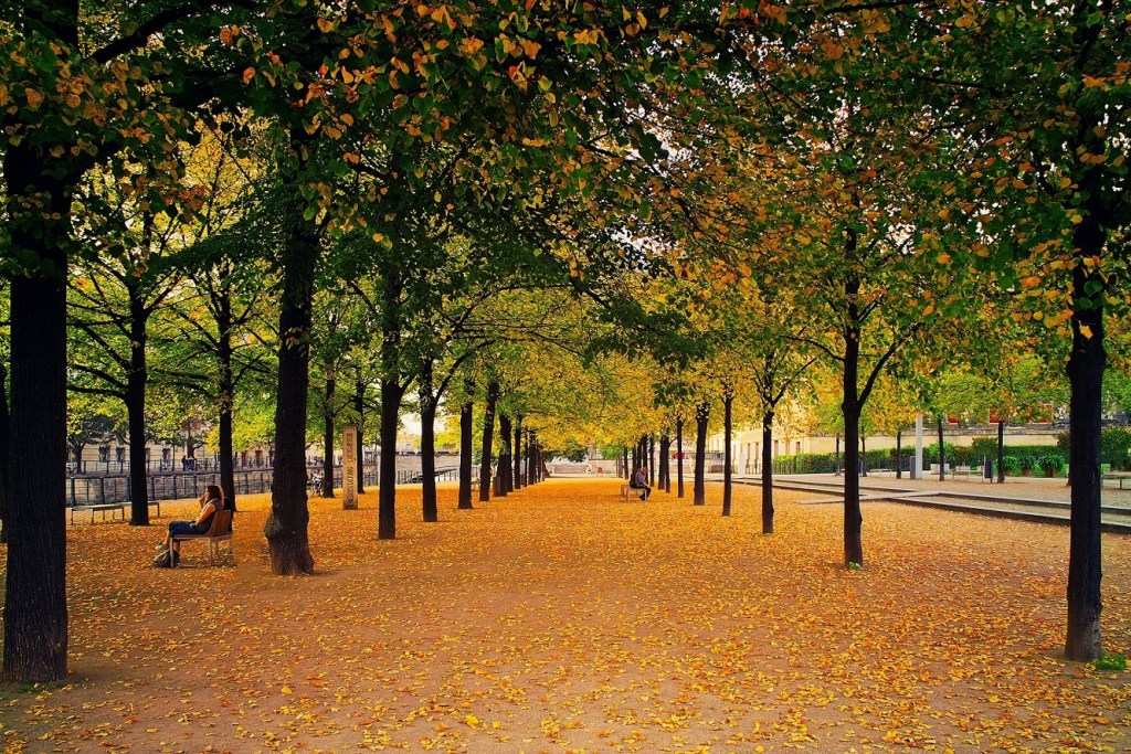 view of the park with autumn trees, fallen golden leaves and a bench with people