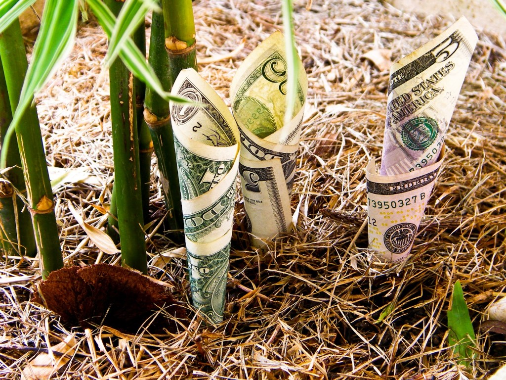 a roll of money growing out of earth next to bamboo shoots