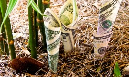money-budget