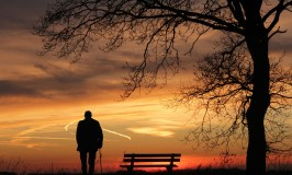 Old man with a cane watching sunset next to the bench and tree