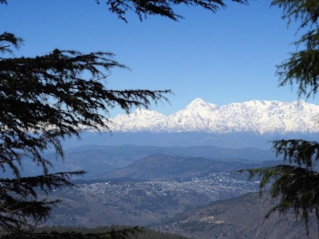 Devadar and Himalayas