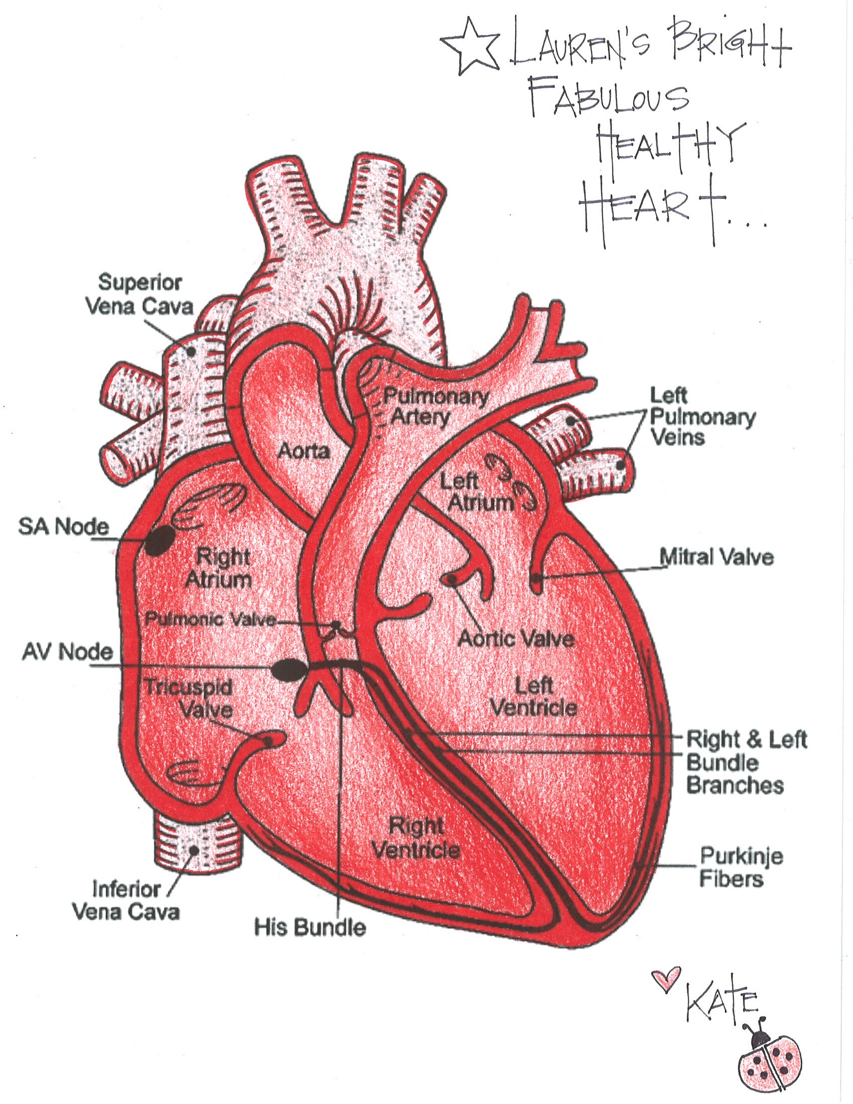 healthy heart diagram ge kv2c wiring pin human for kids the on pinterest