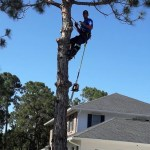 Tree-Trimming-Tree-Removal-Storm-Prep-Loxahatchee-Wellington-Royal-Palm-Palm-Beach-SaveMore-Tree-Service