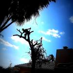 Tree Removal in Palm Beach Gardens - SaveMore Tree Service - Best Tree Service, Tree Trimming, Tree Removal and more in Loxahatchee, Wellington, Lake Worth and Royal Palm Beach - Call 561-513-7883