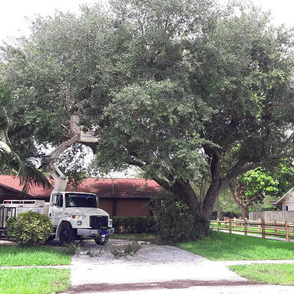 Storm Preparation and Clean up Loxahatchee, West Palm Beach, Wellington, Royal Palm Beach, Jupiter, Palm Beach Gardens SaveMore Tree Service