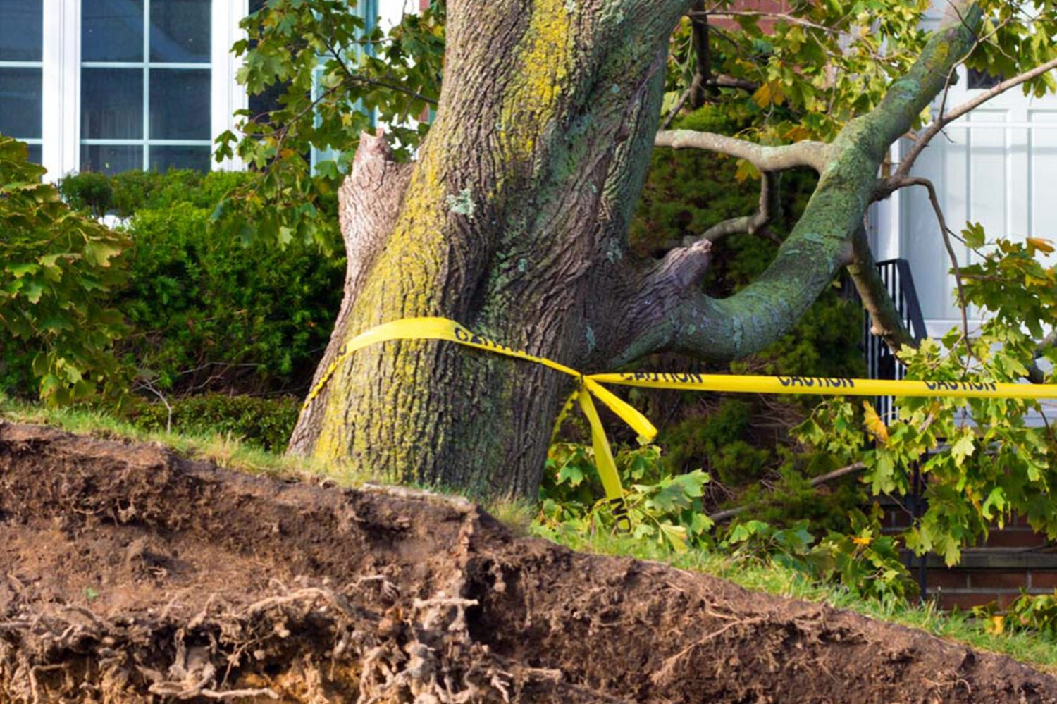 Emergency Tree Removal in Loxahatchee, Royal Palm Beach, Wellington, FL - SaveMore Tree Service