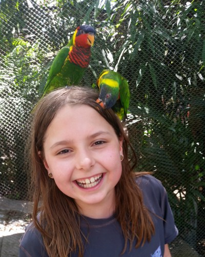 Busch Gardens Tampa Tips: Under the Radar but Worth the Trip