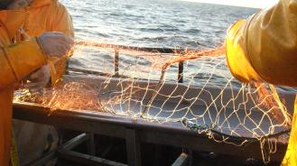 Modified nets on board © Marguerite Tarzia/BirdLife International