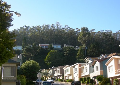 south ridge - the forest in Forest Knolls