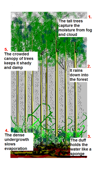 forest canopy diagram air conditioner thermostat wiring cloud save mount sutro