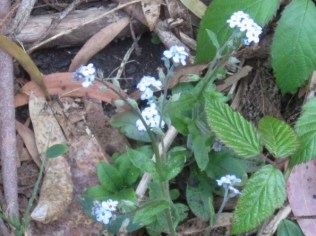 forget me nots 2