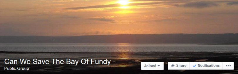 Can We Save The Bay Of Fundy
