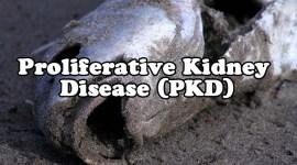 pkd-header-01