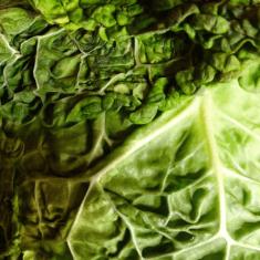 cabbage - Copy