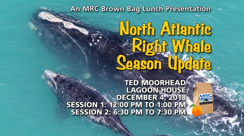 North Atlantic Right Whale Season Update