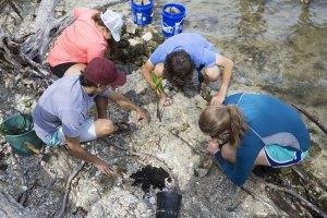 MRC Lagoon Castaway Summer Camp