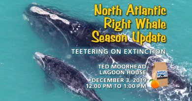 North Atlantic Right Whale Status Update