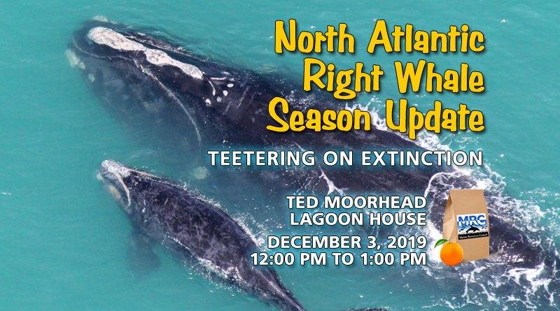 North Atlantic Right Whale Status Update