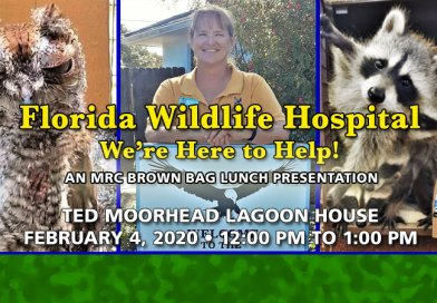 Feb. 4 Brown Bag Lunch: Florida Wildlife Hospital
