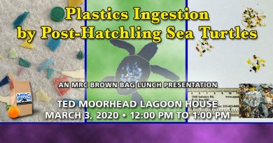 Plastics Ingestion by Post-Hatchling Sea Turtles