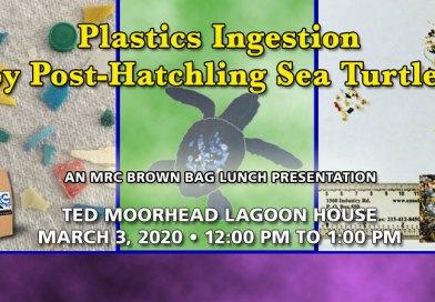 Mar. 3 BBL: Plastics Ingestion by Post-Hatchling Sea Turtles