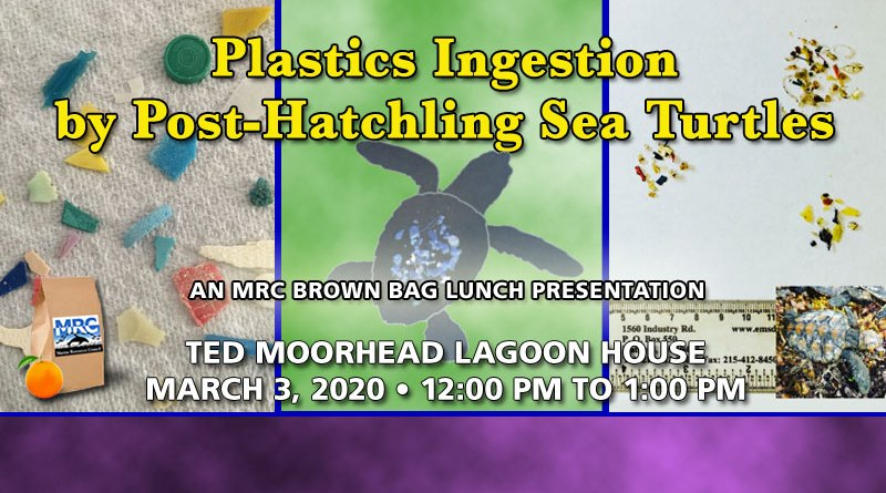 Plastics Ingestion by Post-Hatchling Sea Turtles